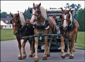 What can Mackinac Island's horses teach us about being the Church?