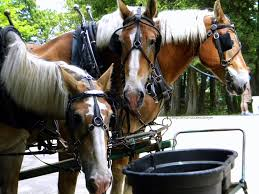 Refreshment and encouragement keep the horses motivated.