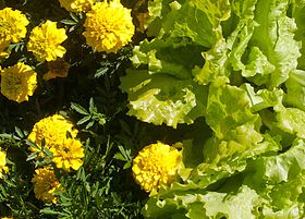 Both congregations have a community garden and share ideas on how to grow and maintain one.